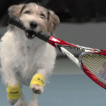 On Puppy Day, Just A Bunch of Tennis Players with Their Dogs